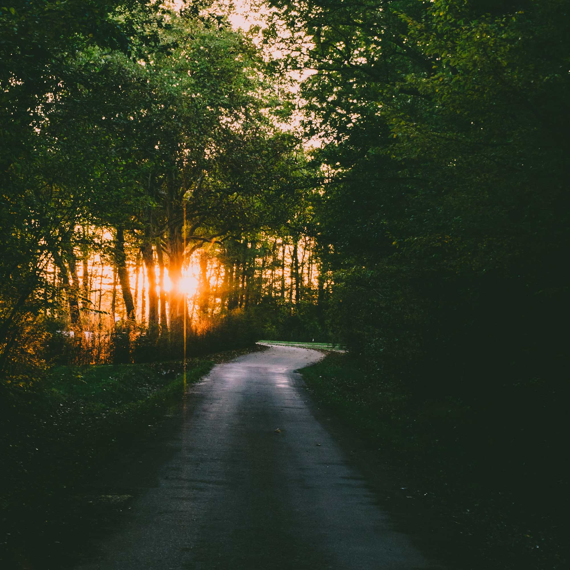 Coucher de Soleil - Forêt de Chambord
