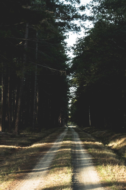 Visite Guidée de la Forêt de Chambord